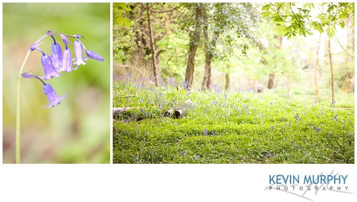 Photo of bluebells in dromoland hotel